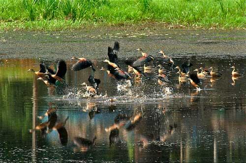 dr-salim-ali-bird-sanctuary-in4-goa