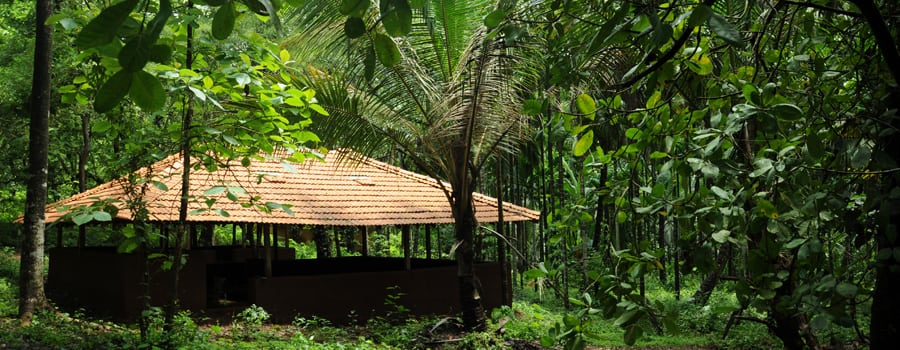 tanshikar_spice_plantation_and_resthouse_goa