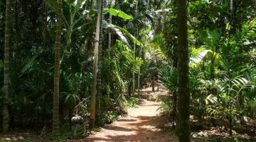 Organic Spice Farm and  Eco Resthouse