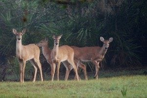 Bhagvan Mahavir Wildlife Sanctuary and Mollem National Park