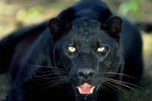 Netravali Wildlife Sanctuary