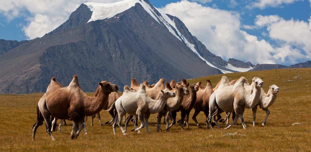 4 Mongolia