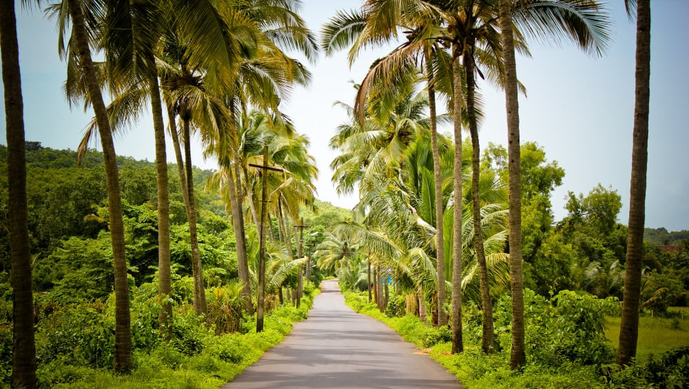 Image result for coconut trees on road,nari