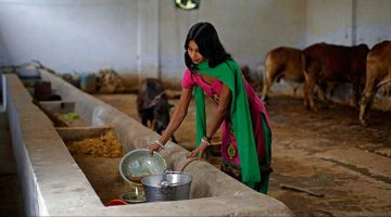 Modi government gave new life to Cow Urine business in India reports foreign media